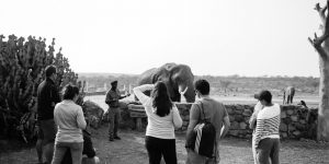 elephant-moments_1