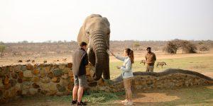 elephant-moments_16