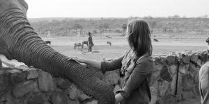 elephant-moments_3