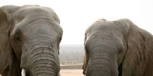 elephant-moments_4
