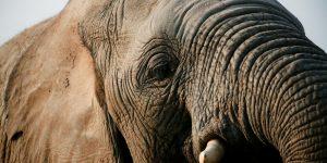 elephant-moments_7