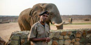 elephant-moments_8b